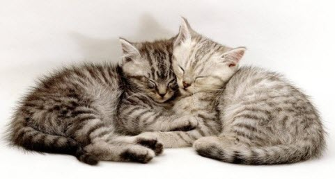 cuddle 2