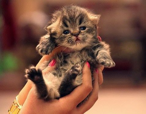 cute kitten in hands