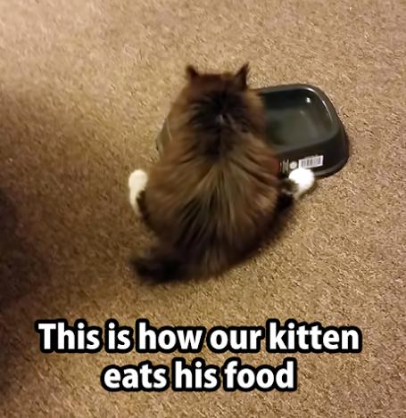 eats food