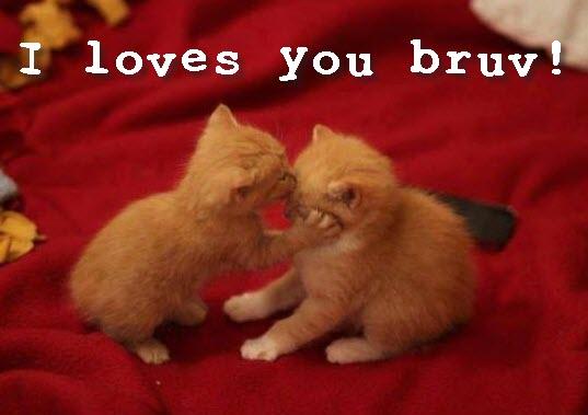 i loves you bruv