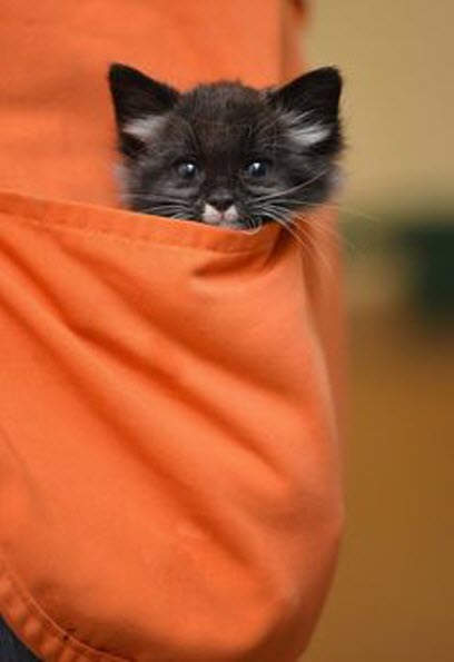 kitten in orange pocket