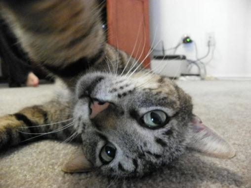 selfie 14