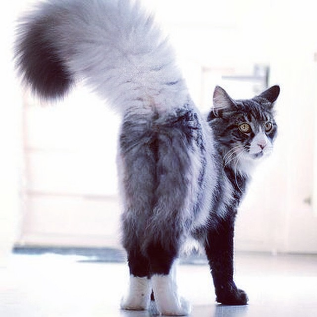 sexy tail
