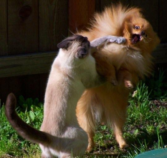 street fighting cat