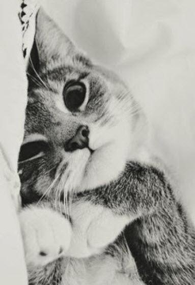 wake up cat