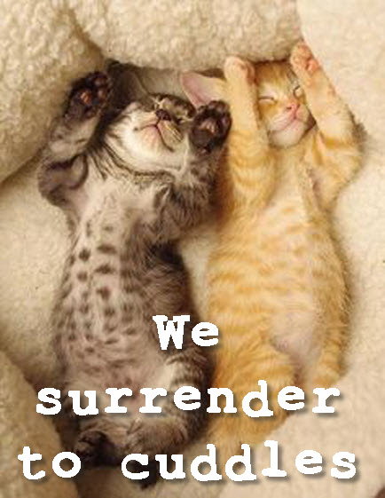 we surrender to cuddles