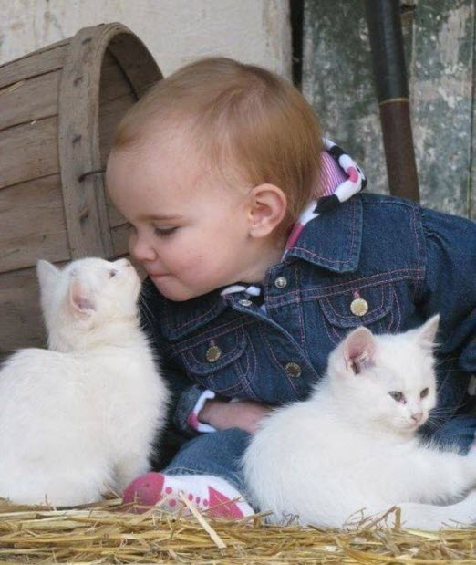 white kittens with toddler