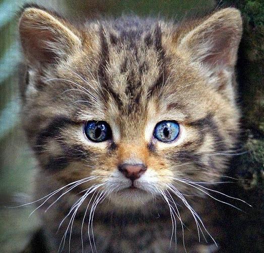wild cat kitten