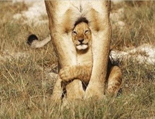 big cat legs