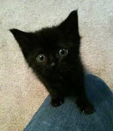 black cutie 2
