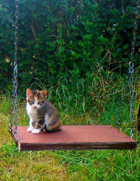 cat on swing