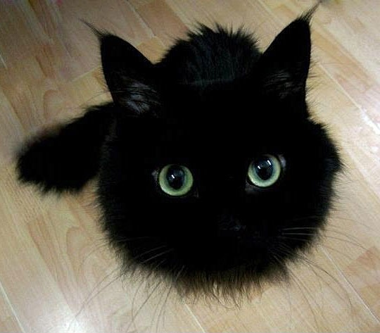 cutest-black-kitty-photo1