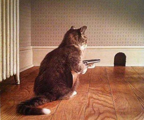 great feline hunter