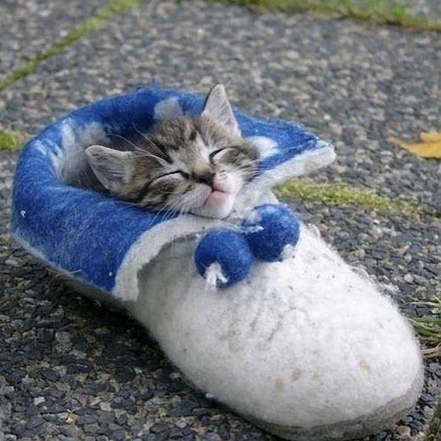 kitten in slipper