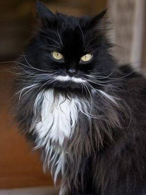 Fabulous Moustaches