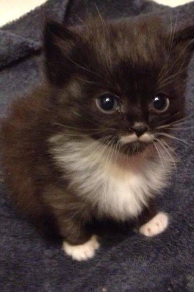 moustache cutie