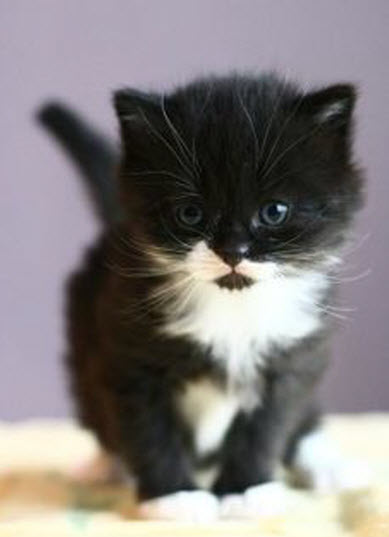 super cute bw kitten