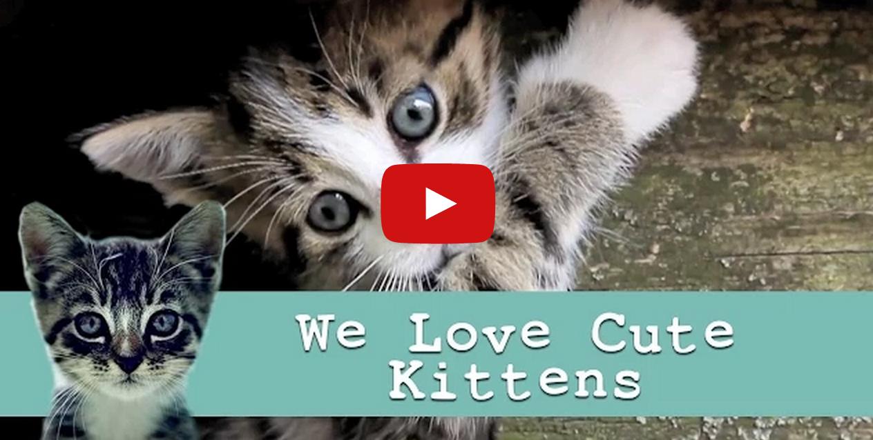cute kittens cat