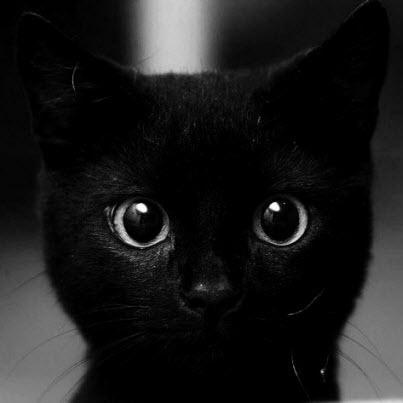 animals-big-eyes-black-black-cat-