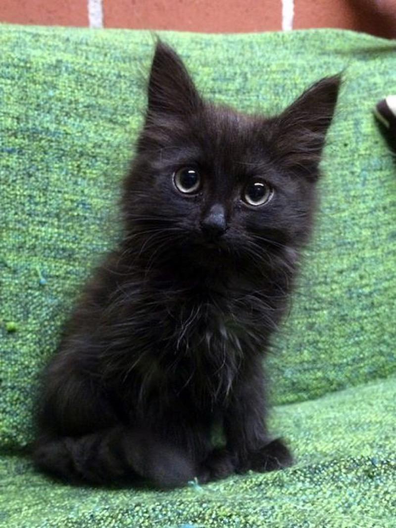 black big ears