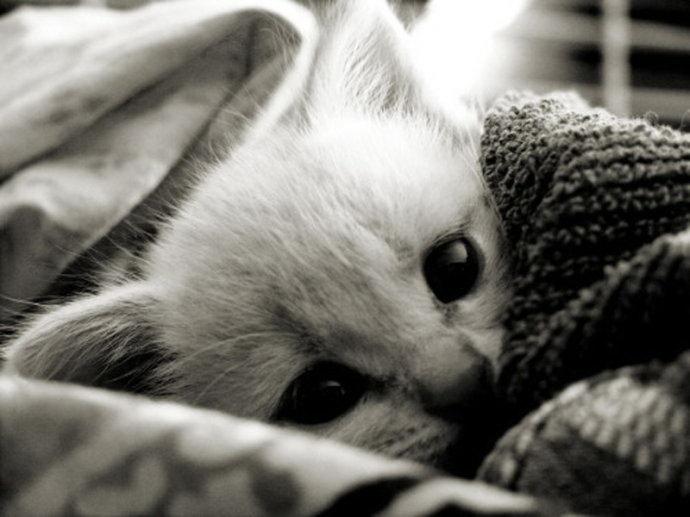 bw white kitten