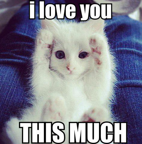 cat loves you this much