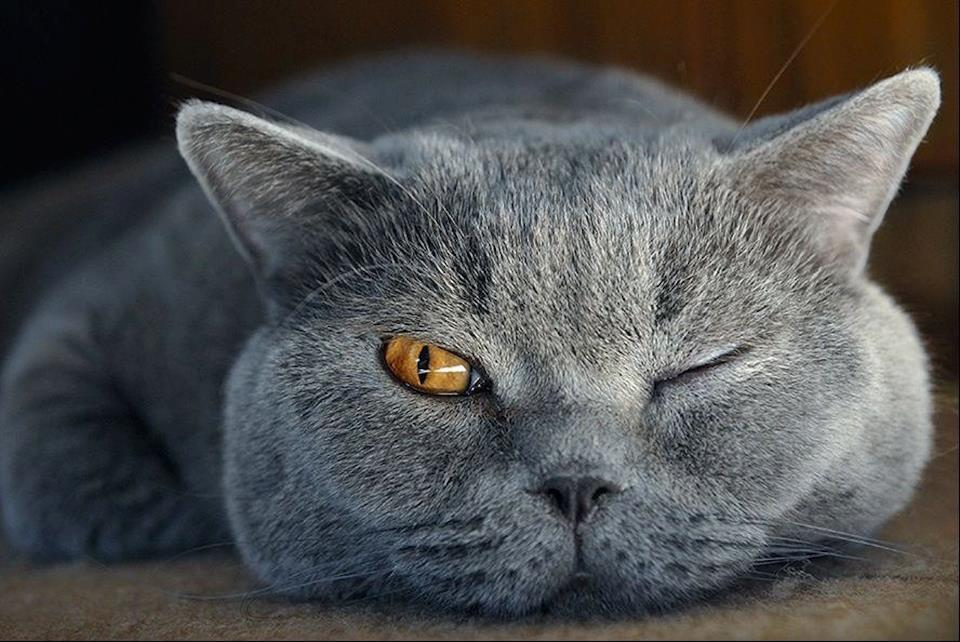 grey cat one eye