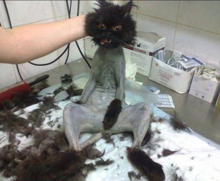 haircut 11