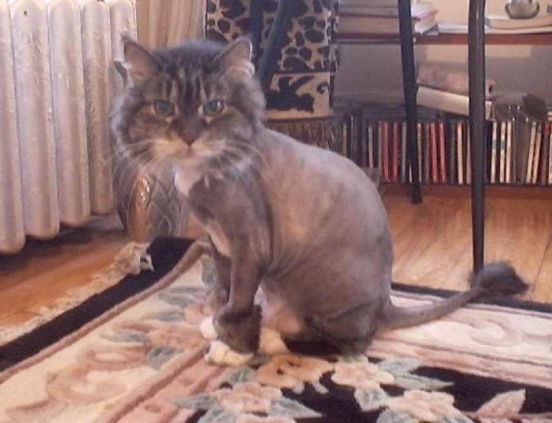 haircut 13