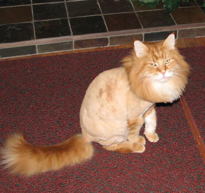 haircut 16
