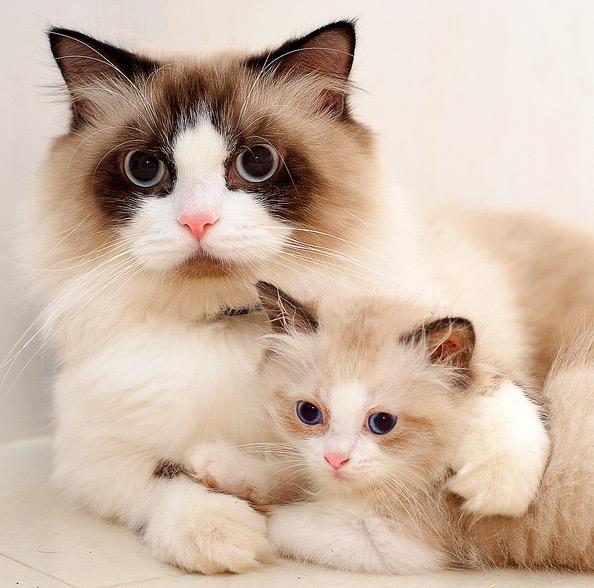 mama et chaton