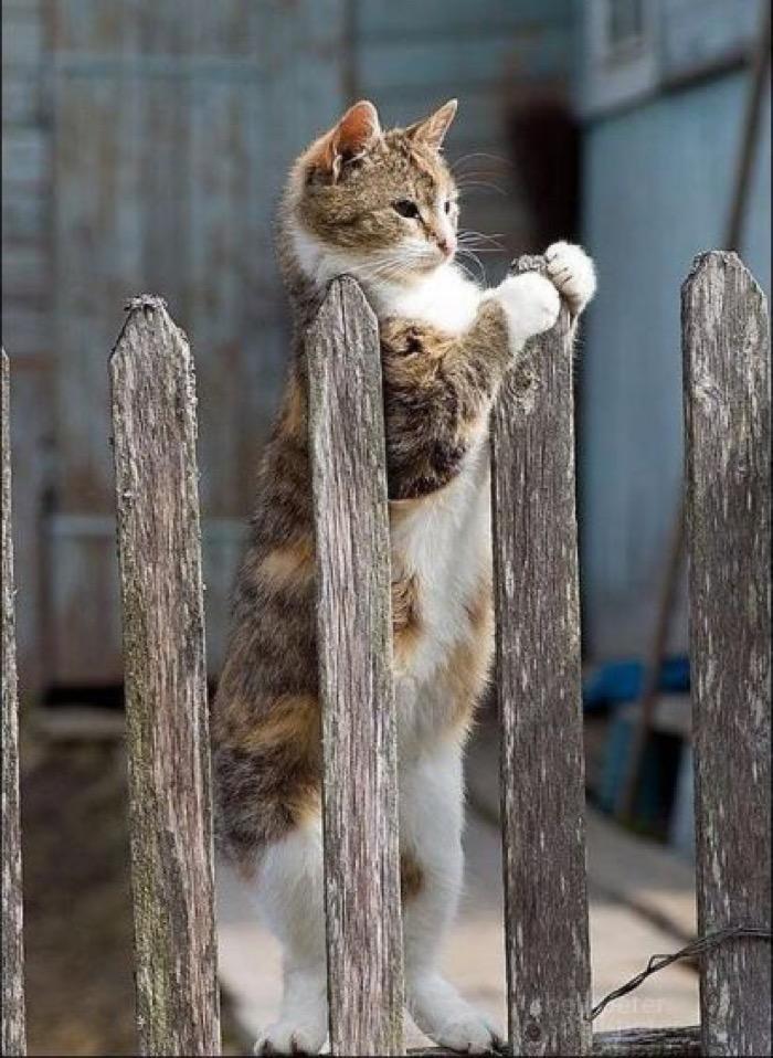 waiting fence
