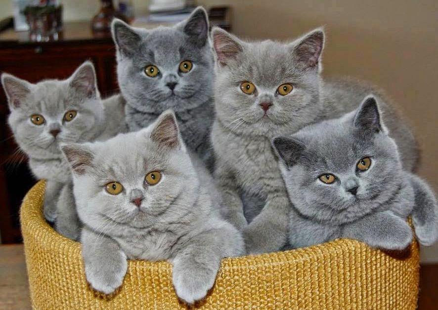 5 grey