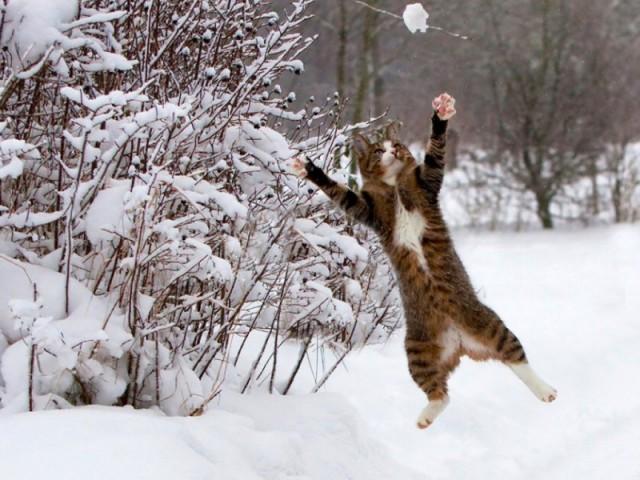 Snowball-Fightjpg