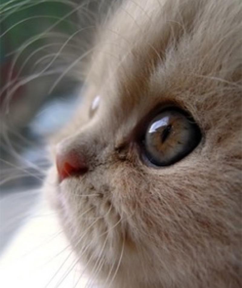 aww big eye