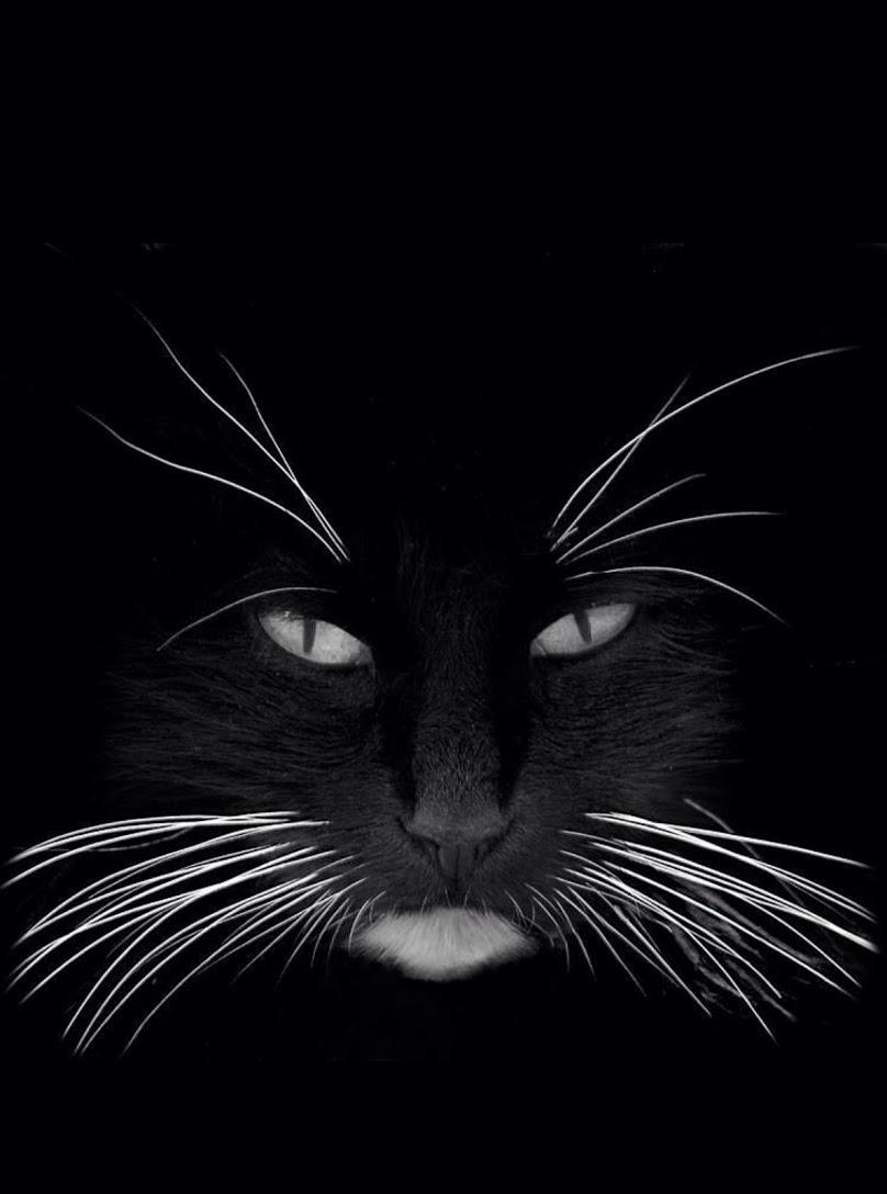 black whiskers