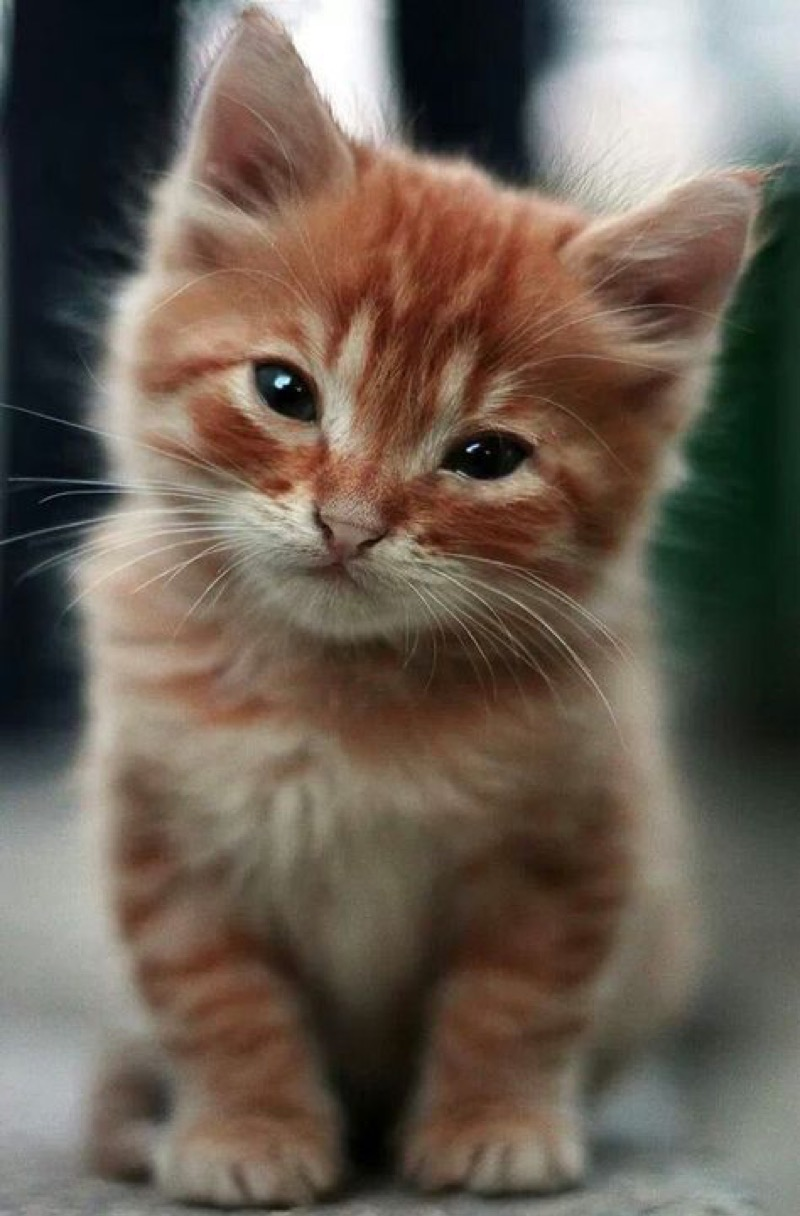 Collection Image Cute Kitten And