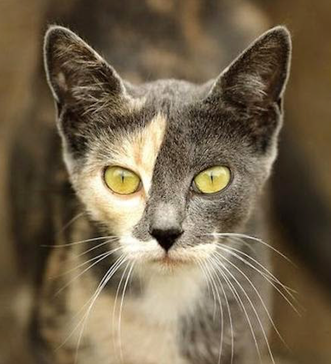 Color cats like - Girl Like