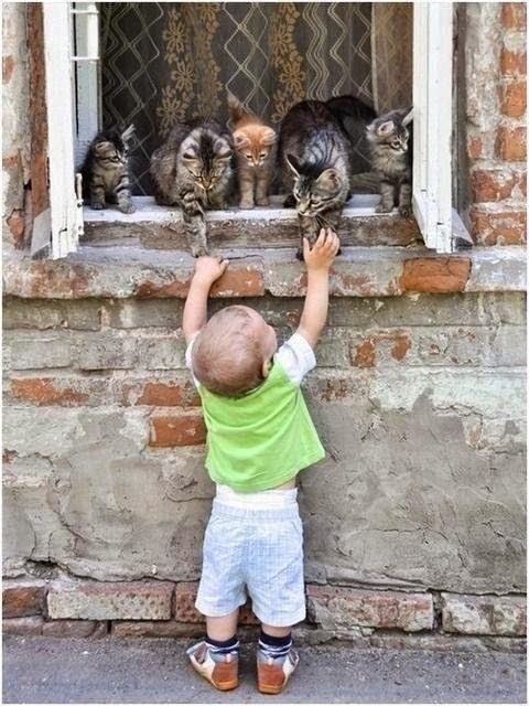 toddler with cats