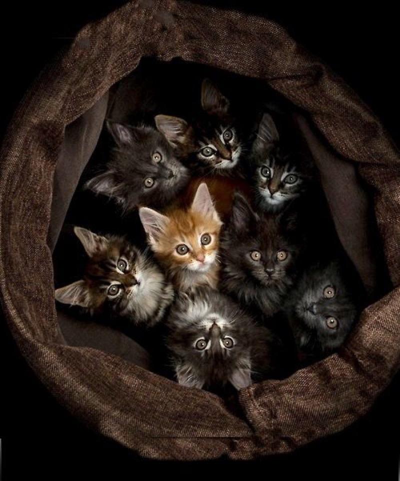 8 kittens