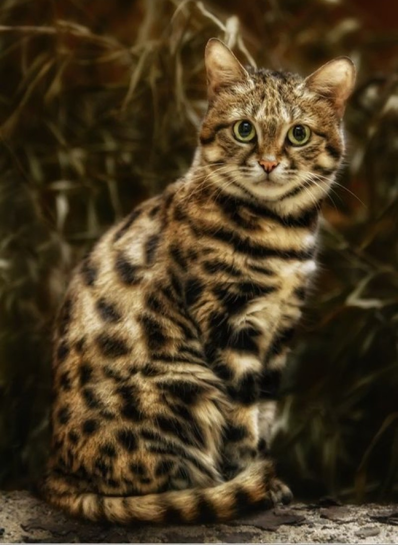 beautiful markings