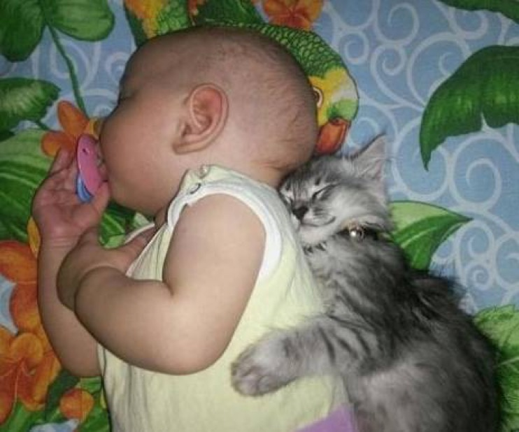 cat and baby copy