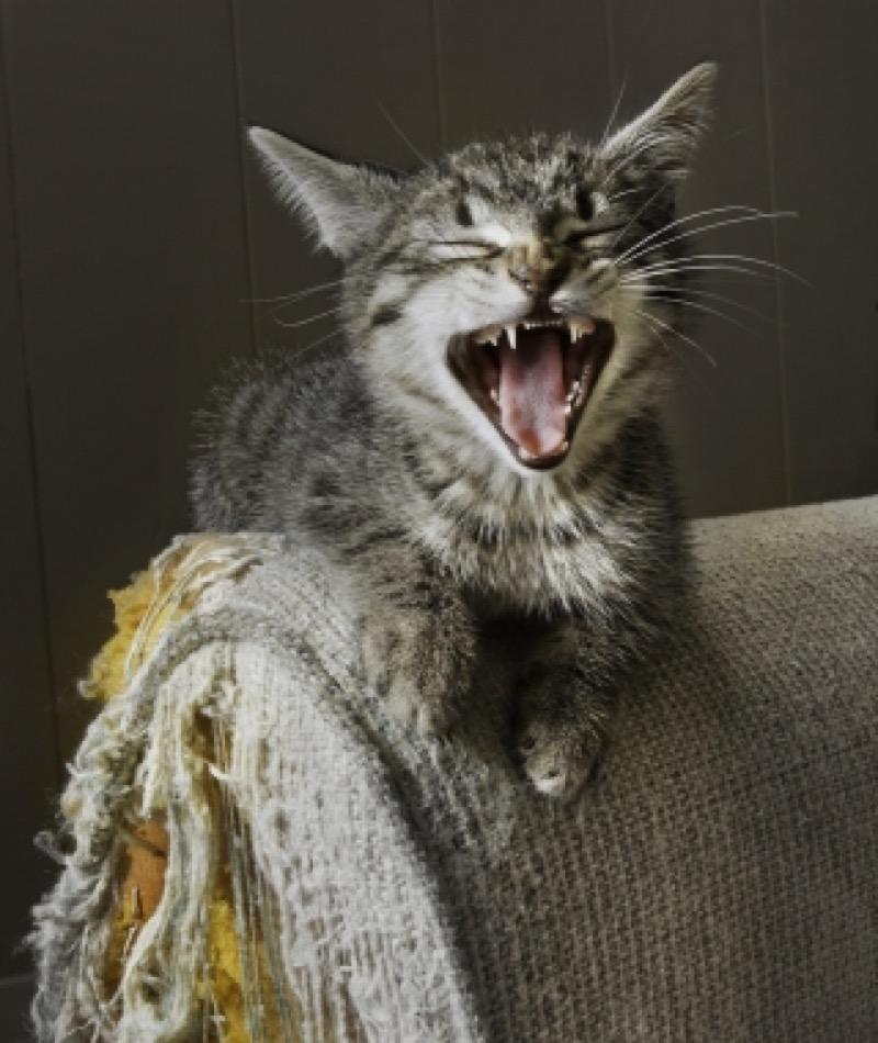 cat-scratching-furniture