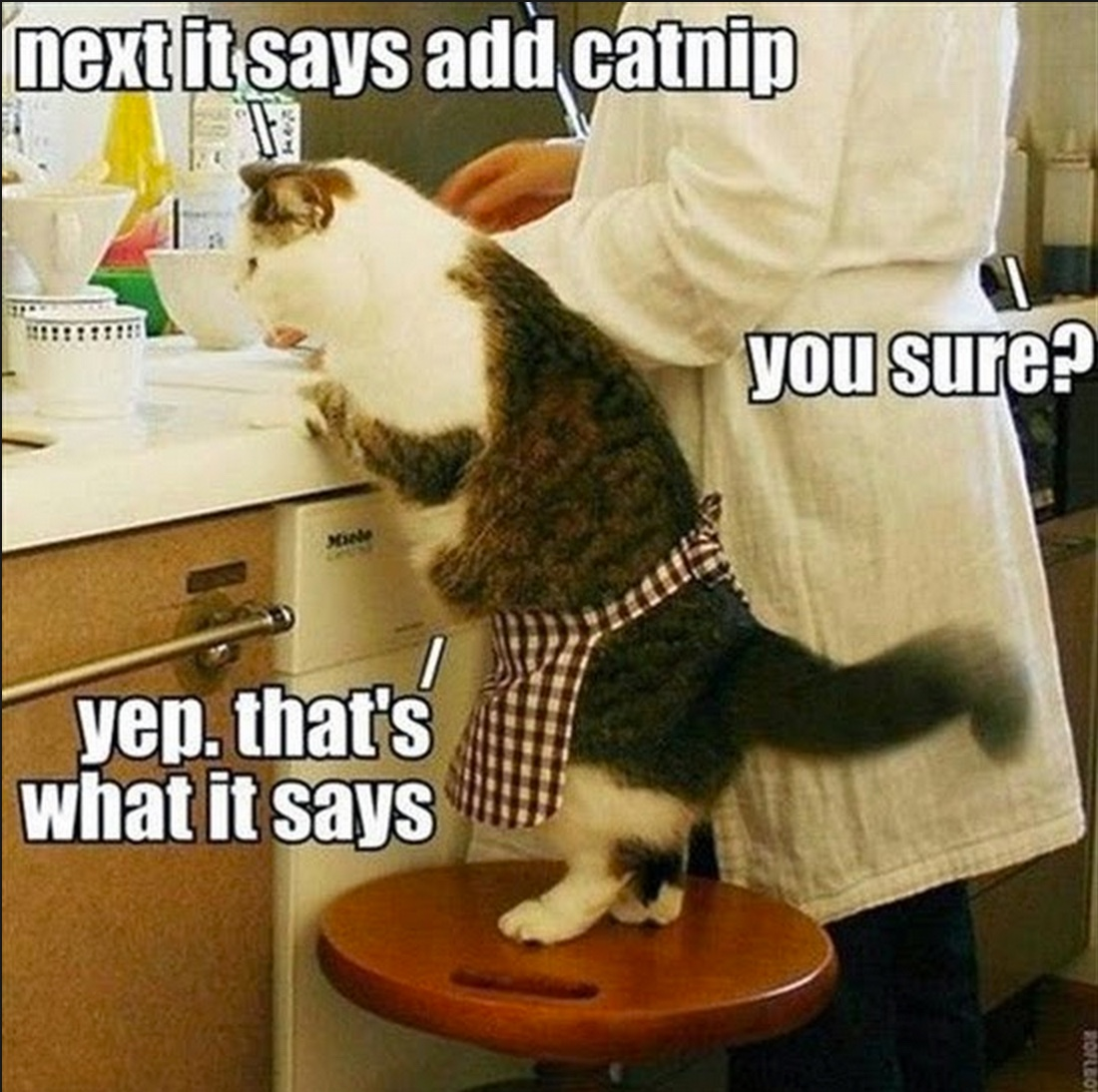 catnip lol copy