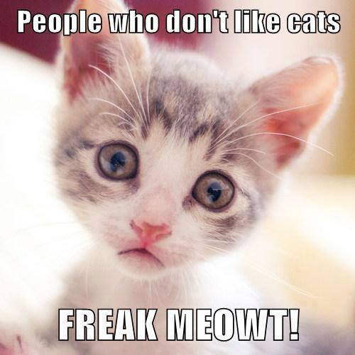 freak meowt lol