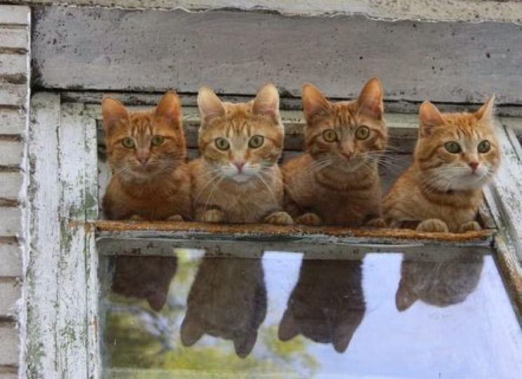 4 cats window