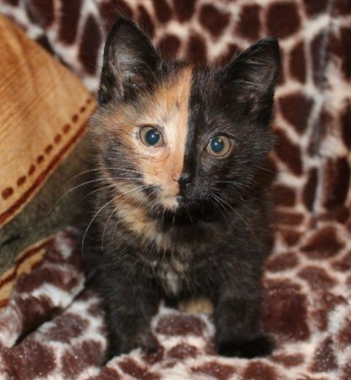 Amazing kitty
