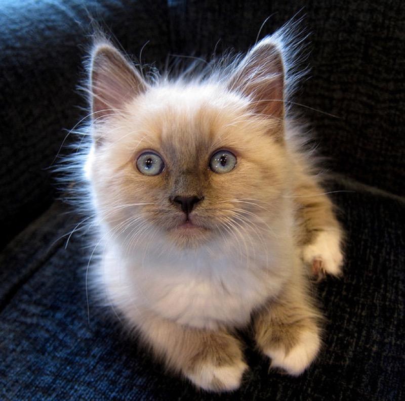 cute white paws