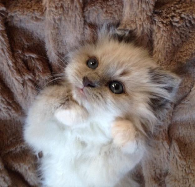 cutie paws