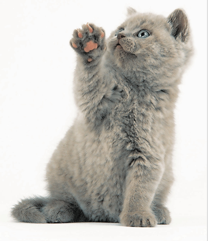 fluffy hi five